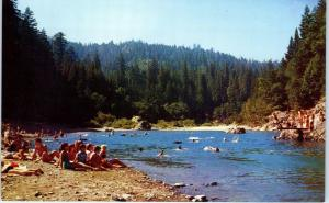 RICHARDSON GROVE STATE PARK, CA  BATHERS SWIM in EEL RIVER  c1950s  Postcard