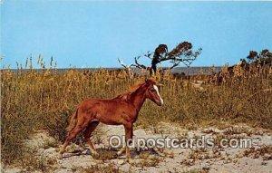 Wild Outter Banks Pony Ocracoke Island, North Carolina Unused