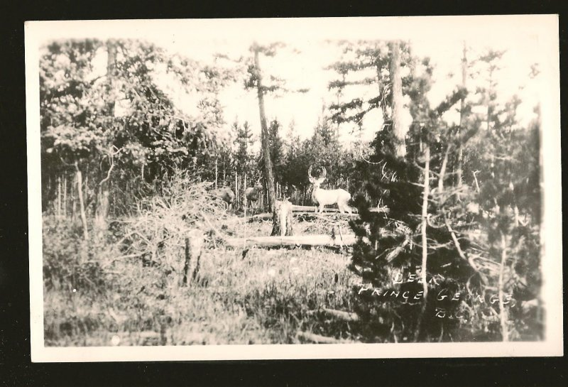 Canada Deer in Forest Prince George BC Black & WhiteReal Photo Postcard Unposted