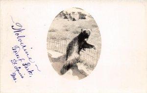 F52/ St Louis Missouri RPPC Postcard c1930s Wolverine Forest Park