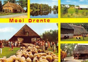Netherlands Mooi Drente Farm Houses Sheeps Horses Lake