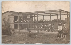 Real Photo Postcard~Children & Dog Guard Chicken Pigeon Coop~Farmer Inside~1908