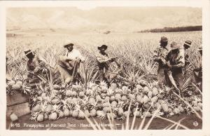 RP: Pineapples at harvest time , Hawaiian Islands , 30-40s