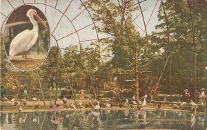 Interior of  flying cage. N.Y. zoo Nice old vintage American postcard