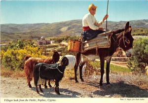 B29551 The Villager returns home with his goats trought the paphos Cyprus