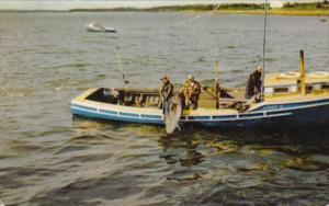 Canada Nova Scotia Wedgeport Tuna Fishing Scene 1955