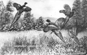 St Francis SD~Exaggerated Nebraska Pheasants~Get Your Gun~Badger~Porcupine~RPPC