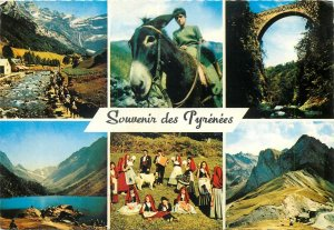 France Postcard Pyrennees different aspects landscapes ethnic types animals folk