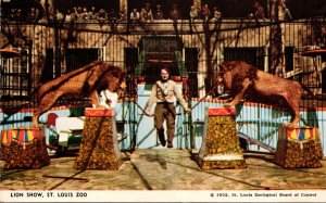 Missouri St Louis Zoo Lion Show Jules Jacot Trainer