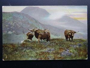 Scotland HIGHLAND CATTLE c1909 Old Postcard by Raphael Tuck 8071