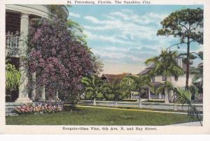 Florida St Petersburg Bougainvillaea Vine 6th Avenue South and Bay Street