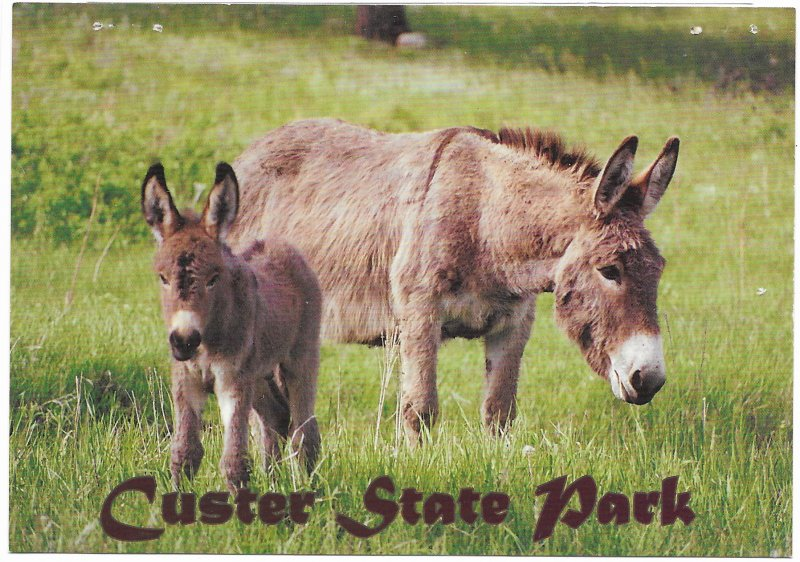 US Unused. South Dakota Donkeys, Custer State Park.  Nice.