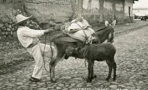 Mexico - Arriero, Man and Donkeys    *RPPC