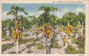 Florida Typical Papaya Plantation Curteich
