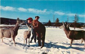 Yellowstone National Park Wyoming~Feeding Hungry Deer In Wintertime~1950's PC