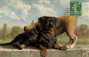 PC CPA DOGS, DACHSHUND PROTECTED BY OTHER DOG, OILETTE, POSTCARD (b2552)
