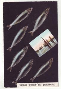 P817 1906 fish and boat scene caller iberrin fae peterbead great britain stamped