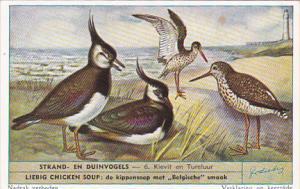 Liebig S1610 Birds Of Beaches and Dunes No 6 Kievit en Tureluur