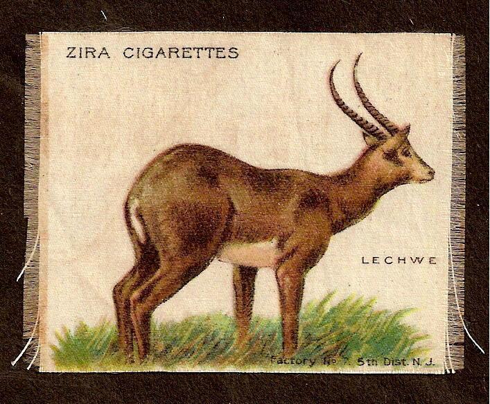 TURN OF CENTURY CIGARETTE SILK -  LECHWE - ZIRA