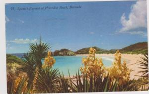 Spanish Bayonet at Horseshoe Beach, Bermuda 1958