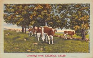 Salinas California~Brown & White Cows Grazing Near Shade Trees~Greetings 1940s