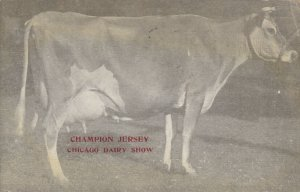 CHICAGO, Illinois; PU-1913; Champion Jersey Cow, Chicago Dairy Show