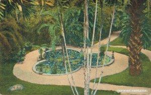 USA Lily Pond Castleton 04.23