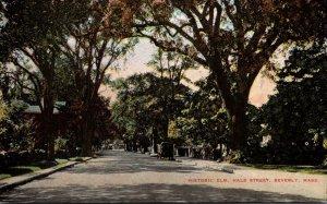 Massachusetts Beverly Hale Street Historic Elm