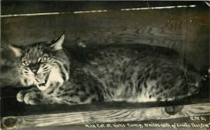 Grants Pass Oregon Hicks Camp 1930s Patterson Wild Cat RPPC Photo Postcard 2101