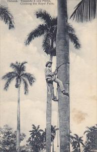 Climbing The Royal Palm Havana Cuba