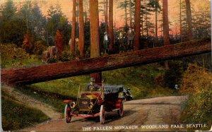 Washington Seattle Woodland Park The Fallen Monarch