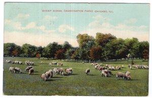 Chicago, ILL, Sheep Scene, (Washington Park)