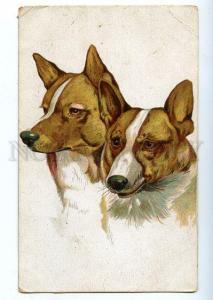 131291 Hunt LAIKA Dogs Portrair Vintage RARE Russian PC