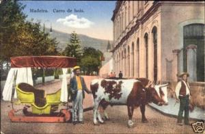 portugal, MADEIRA, Carro de Bois, Bullock Cart (1920s)