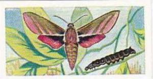 Swettenhams Tea Vintage Trade Card Butterflies & Moths 1958 No 14 Elephant Ha...