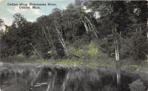 Oakley Michigan~Cedar Trees Along Shiawassee River~Postcard Mailed 1916