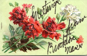 Massachusetts Brockton Greetings With Carnations