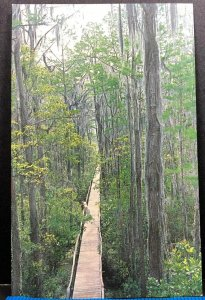 Boardwalk Okefenokee Swamp Park Waycross Georgia Vintage Postcard