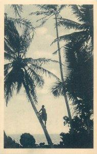 Northwestern Pacific Ocean Caroline Islands the Carolines coconut tree harvest