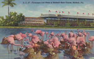 Flamingos and Nests At Hialeah Race Course Hialeah Florida Curteich