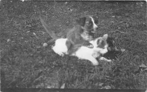 F27/ Animal RPPC Photo Postcard 1914 Dog Riding Cat! Comic 2