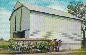 Pennsylvania Dutch Tobacco Shed With Wagon Loaded With Freshly Cut Tobacco