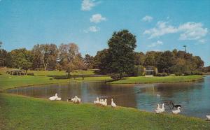Freedom Park, Swans, CHARLOTTE, North Carolina, PU-1965