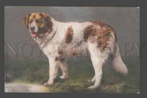 086810 Lovely SAINT BERNARD Dog as rescuer Vintage Photo Color