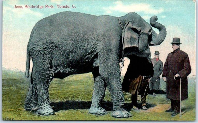 Toledo, Ohio Postcard Walbridge Park Zoo / Jose the Elephant & Trainer c1910s