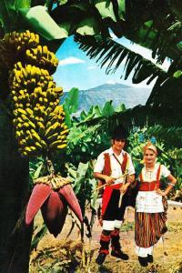Tenerife Bananas Costume Fashion Traditional Ladies Photo Dress Postcard