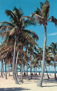 10670 Palm Trees at the Beach