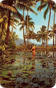 Fiji Tropical Beauty  Tropical Beauty