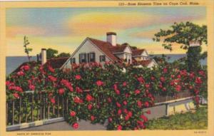 Massachusetts Cape Cod Rose Bolssom Time Curteich