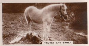 Horse Medical Nurse & Baby Old Real Photo Antique Cigarette Card